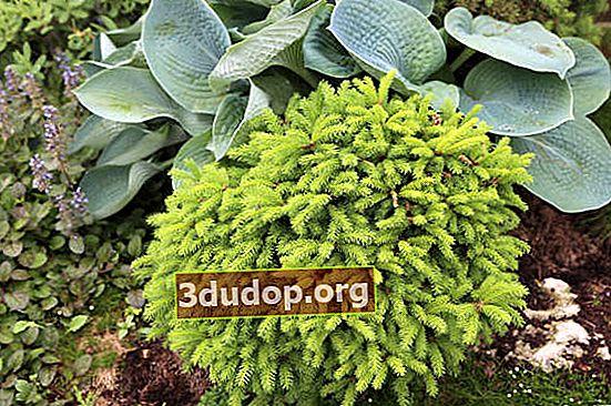 Îngrășăminte minerale pentru plante de grădină