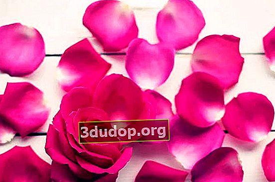 Gulbesheker dan gulkand, atau memasak dengan bunga mawar