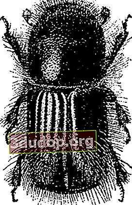 Hutan spruce di bawah ancaman kumbang kulit kayu