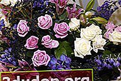 Keserasian bunga dalam sejambak