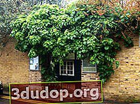 Äldsta botaniska trädgård i Chelsea
