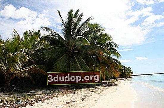 Pohon kelapa - pohon kehidupan Asia