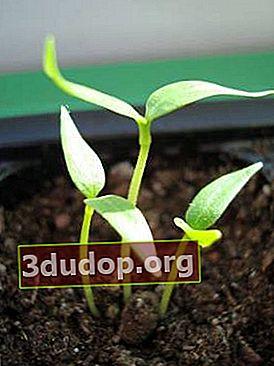 Soluri și substraturi pentru răsaduri în creștere