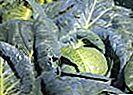 Nutriția și protecția plantelor