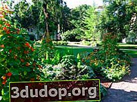 Taman hias - enak, sehat dan indah