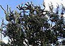 EKOGEL® berkesan untuk tanaman, selamat untuk anda!