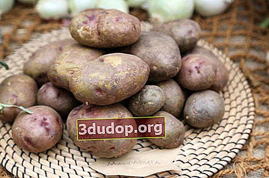 Propriétés utiles des pommes de terre