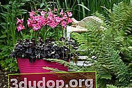 Bouquet musim panas gladioli dan callas: 100% tenaga dan gaya