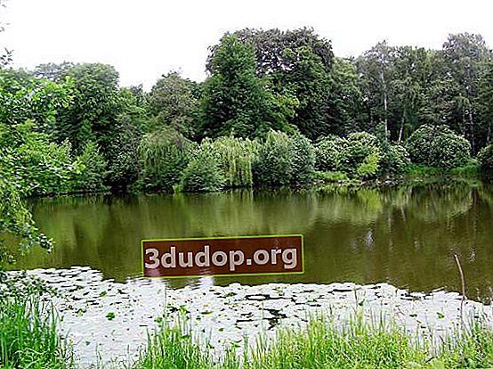 Kaliningrads botaniska trädgård