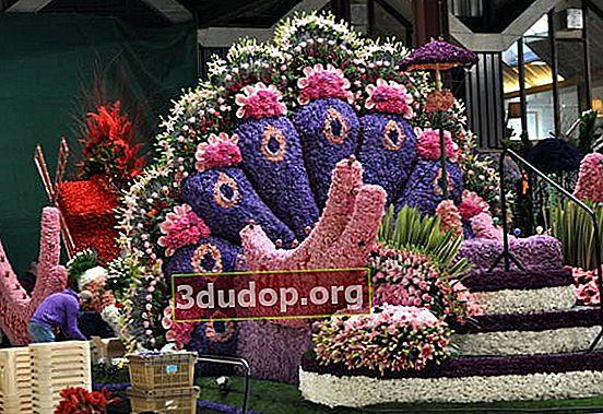 Blommaparad i Holland