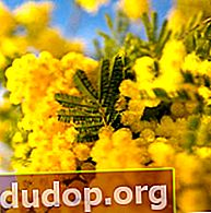 ดอกไม้สีเหลือง
